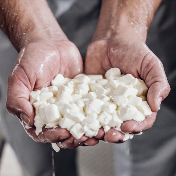 Bildmotiv für Käseherstellung